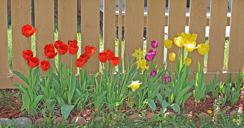 Клумба из тюльпанов своими руками на даче фото 550