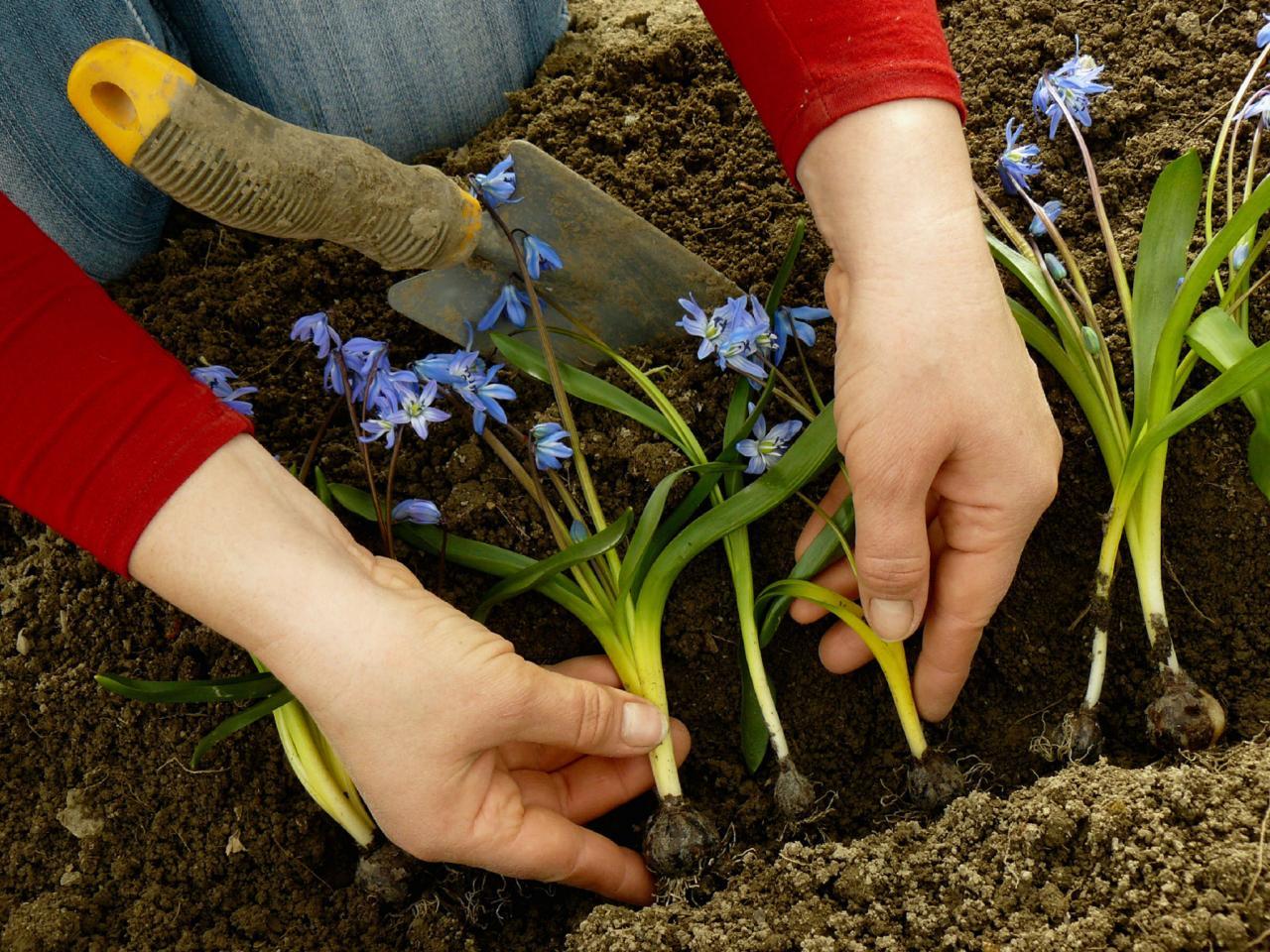 В какой день лучше всего сажать цветы 334