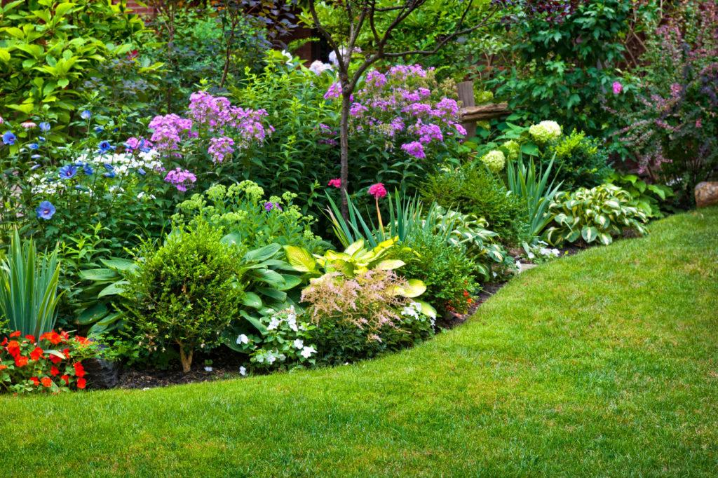 Фото красивых цветников в саду своими руками