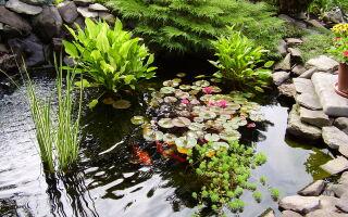 О водоемах в саду