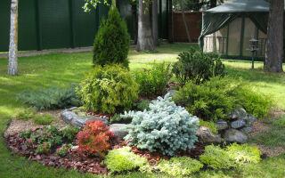 Растения для альпийской горки: как их подобрать и как посадить