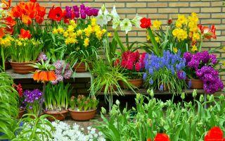 Посадка цветов в сентябре: узнаем, какие!