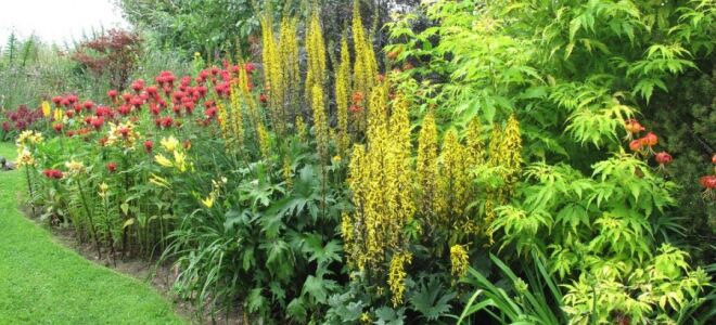 Как придать цветнику изящество: все о вуальных растениях