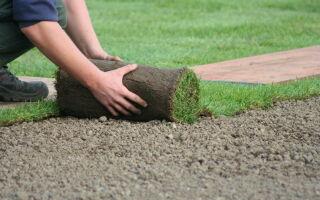 Рулонный газон — красиво и быстро