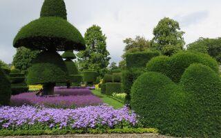 Топиарии в саду – классика и стиль