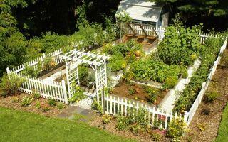 Варианты ландшафтного дизайна огорода и сада