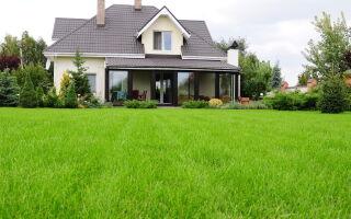 Трава для газона: как выбрать?