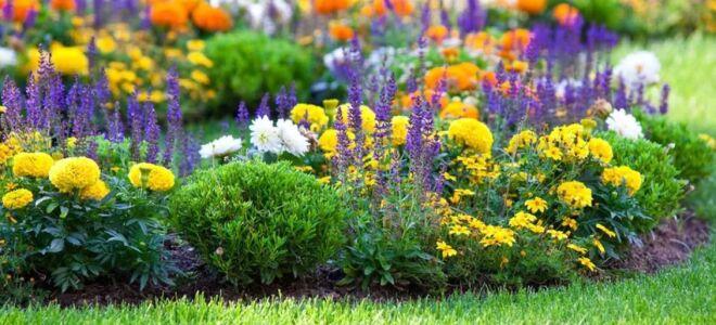 Вредные советы по садоводству: верить можно не всему