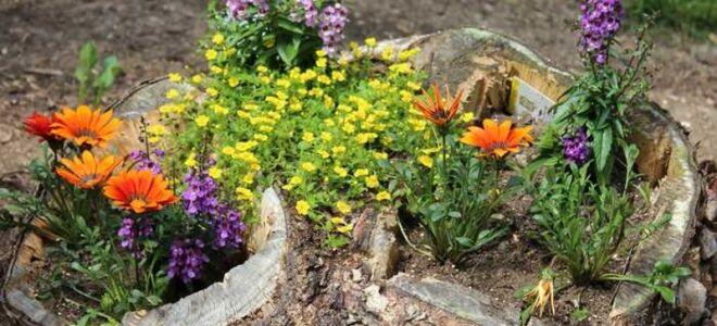 Как правильно подготовить клумбы для непрерывного цветения