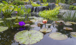 Растения для пруда: оформляем декоративный водоем