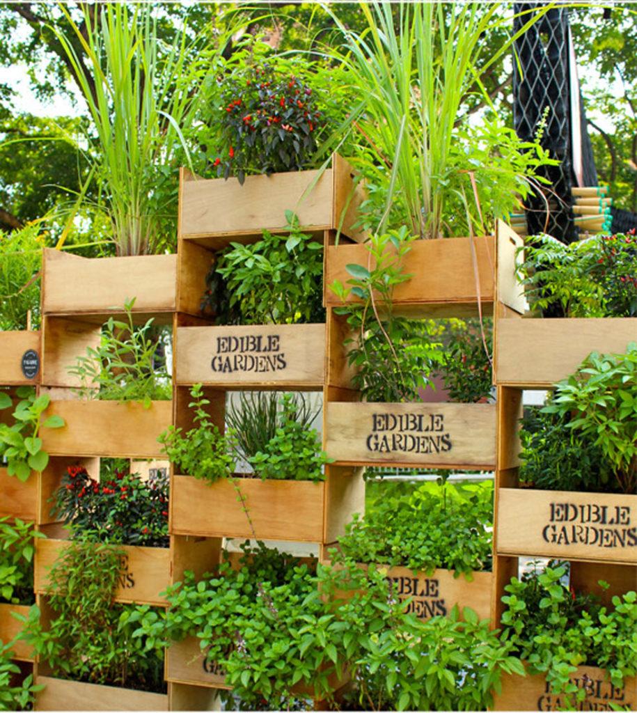 Вертикальное озеленение в ландшафтном дизайне маленького участка