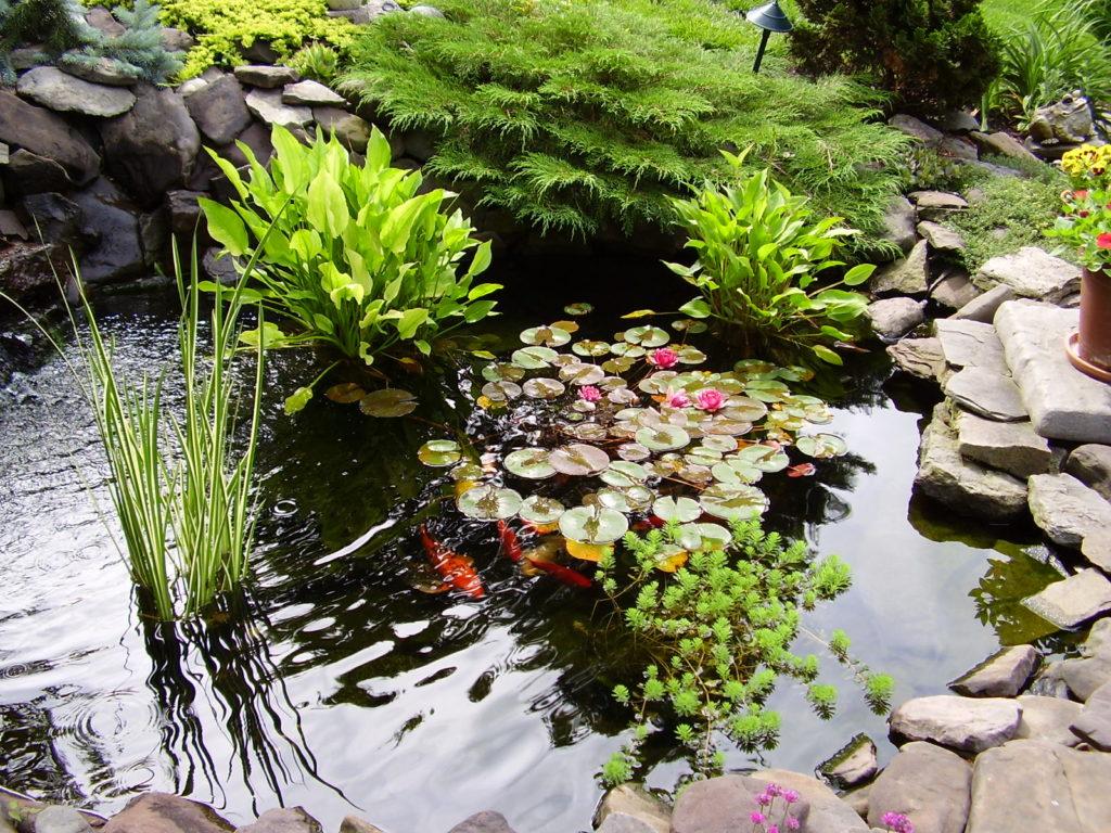 Водоемы в саду