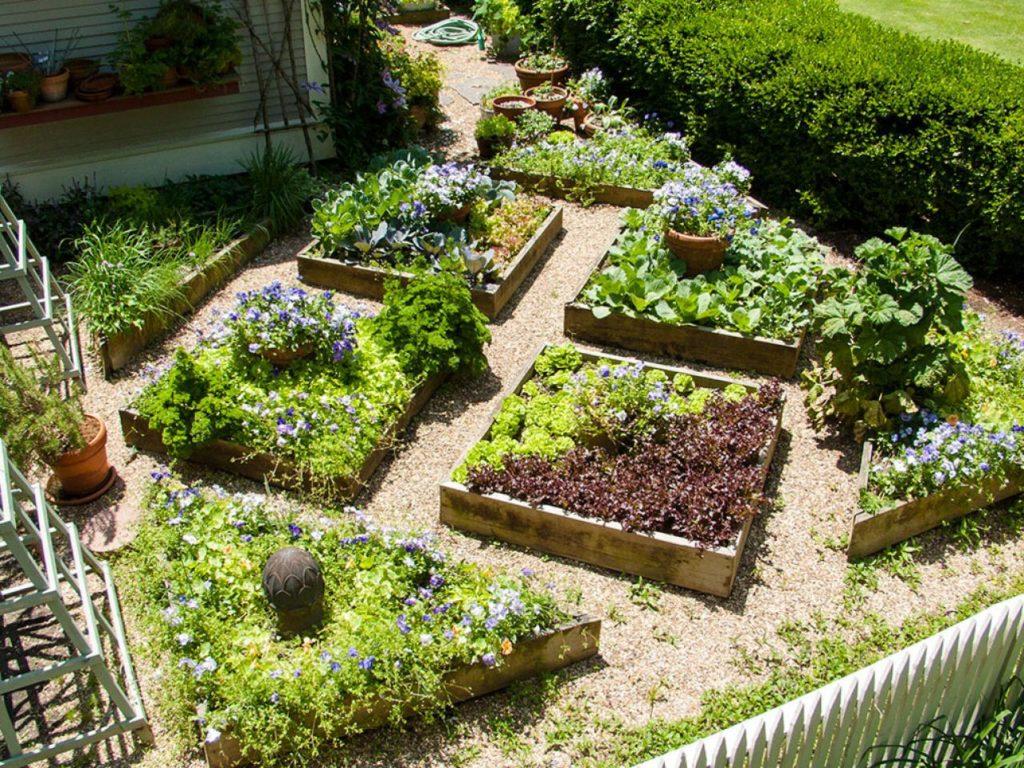 Пример декоративного огорода