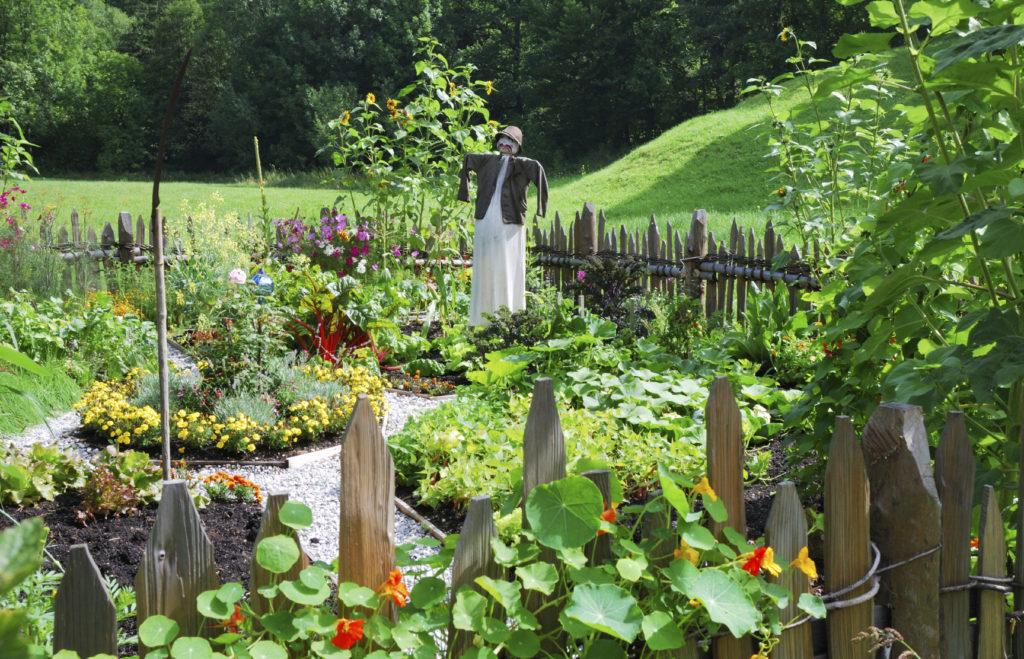 Сад и огород в деревенском стиле