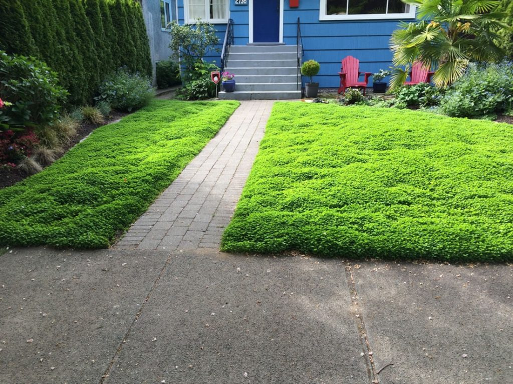 Вместо обычного газона