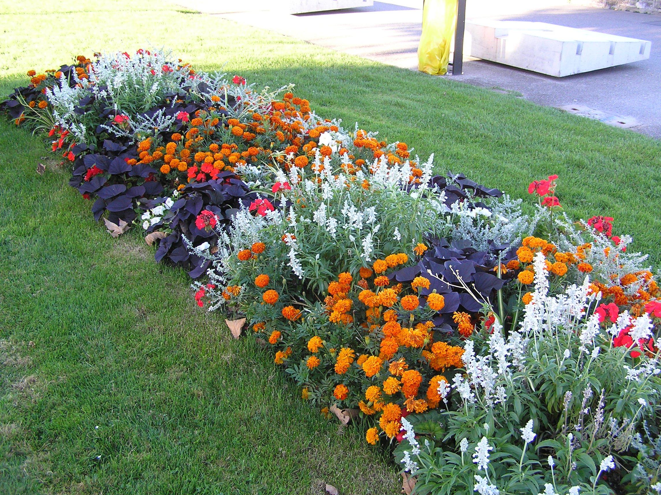 Сажаем цветы вдоль дорожки