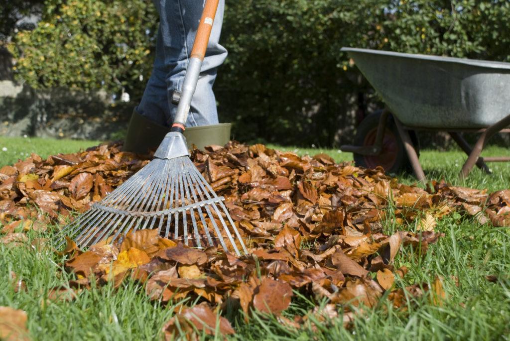 Уборка газона осенью