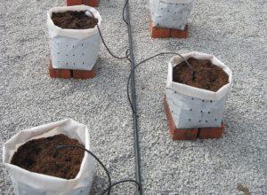 Индивидуальный полив растений с помощью капельниц-колышков с подводящими микрошлангами