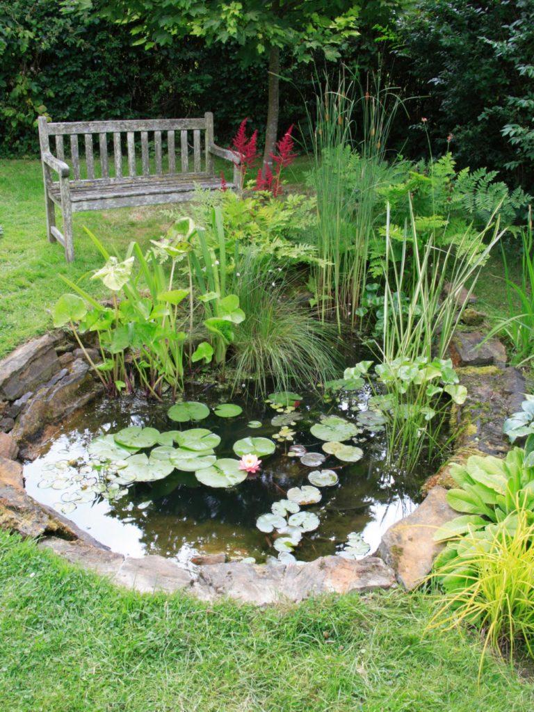 Небольшой пруд в саду