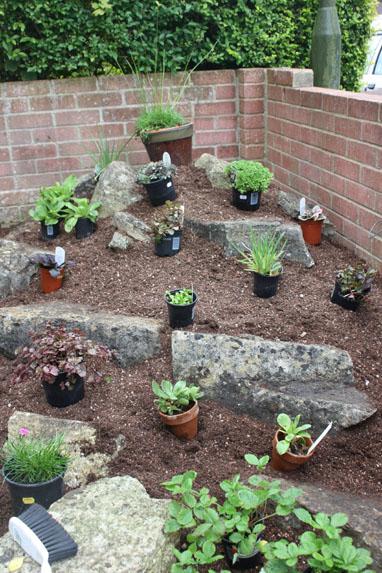 Шаг7. Расставляем выбранные растения на их места и оцениваем композицию