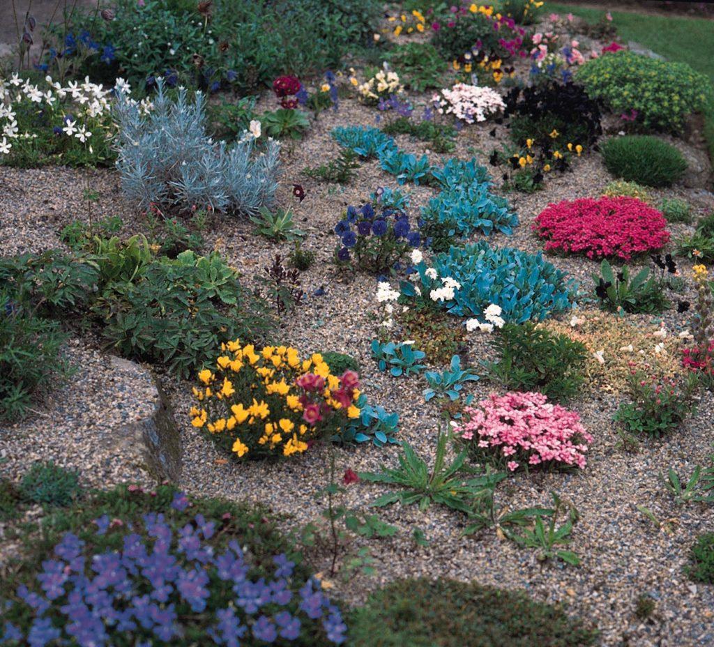 Разноцветные горные растения