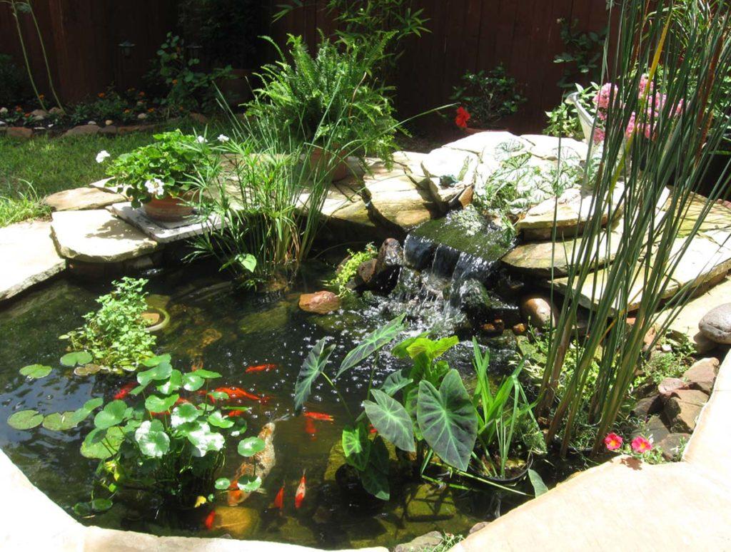 Небольшой пруд с растениями