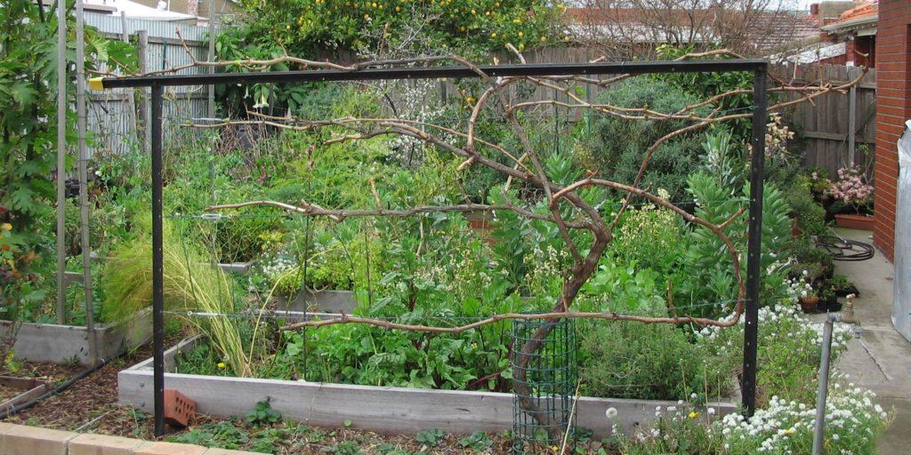 Вертикальная одноплоскостная шпалера для винограда