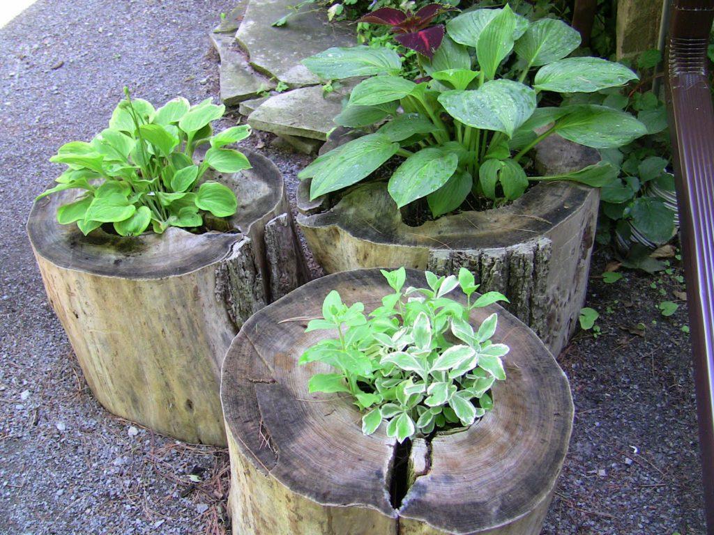 Цветочницы для сада из пней
