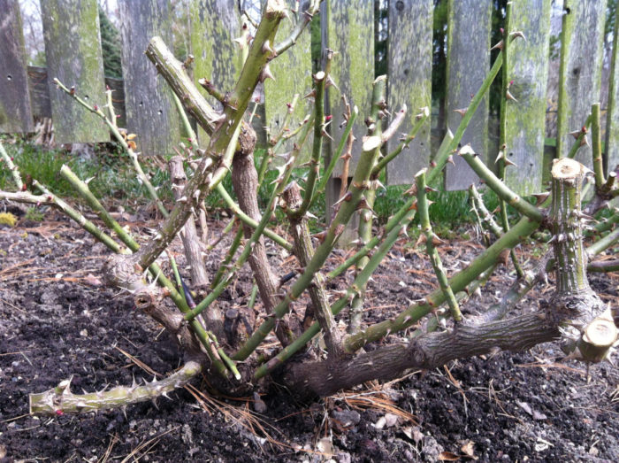 Обрезка поврежденных ветвей