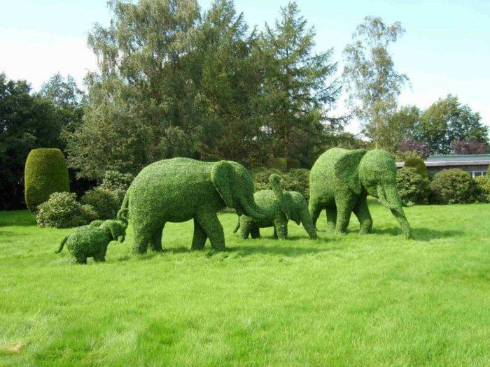 Топиарии в виде слонов