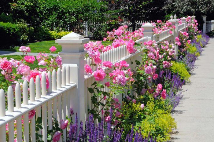 Деревянный забор и розы