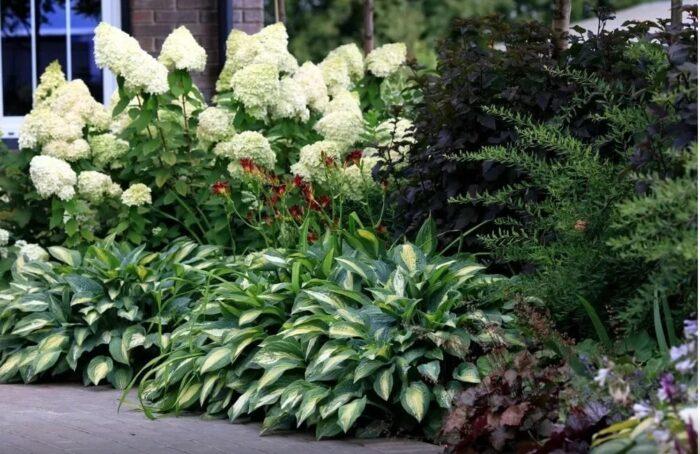 Гортензия с хвойными растениями