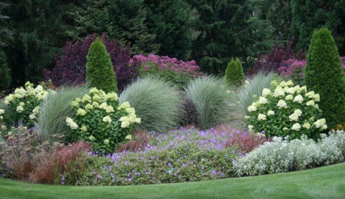 Гортензия и декоративные травы