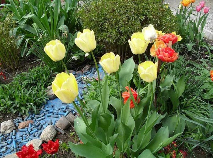 Тюльпаны в в саду