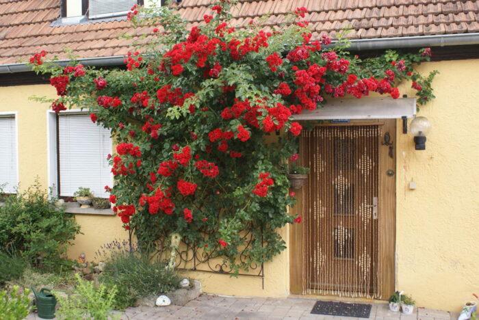 Роза Сантана