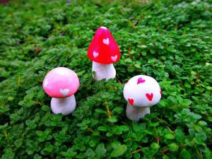 Фигуры грибов в саду